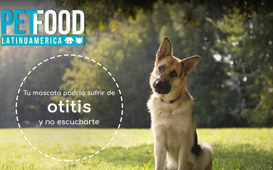 Tu mascota podría sufrir de otitis y no escucharte.