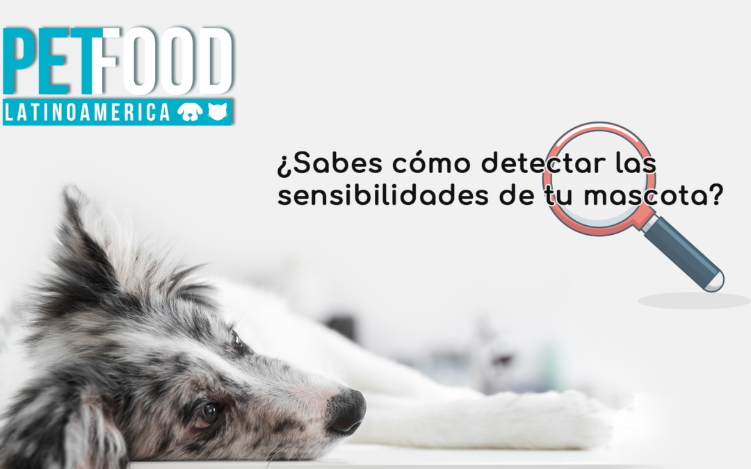 ¿Sabes cómo detectar las sensibilidades de tu mascota?