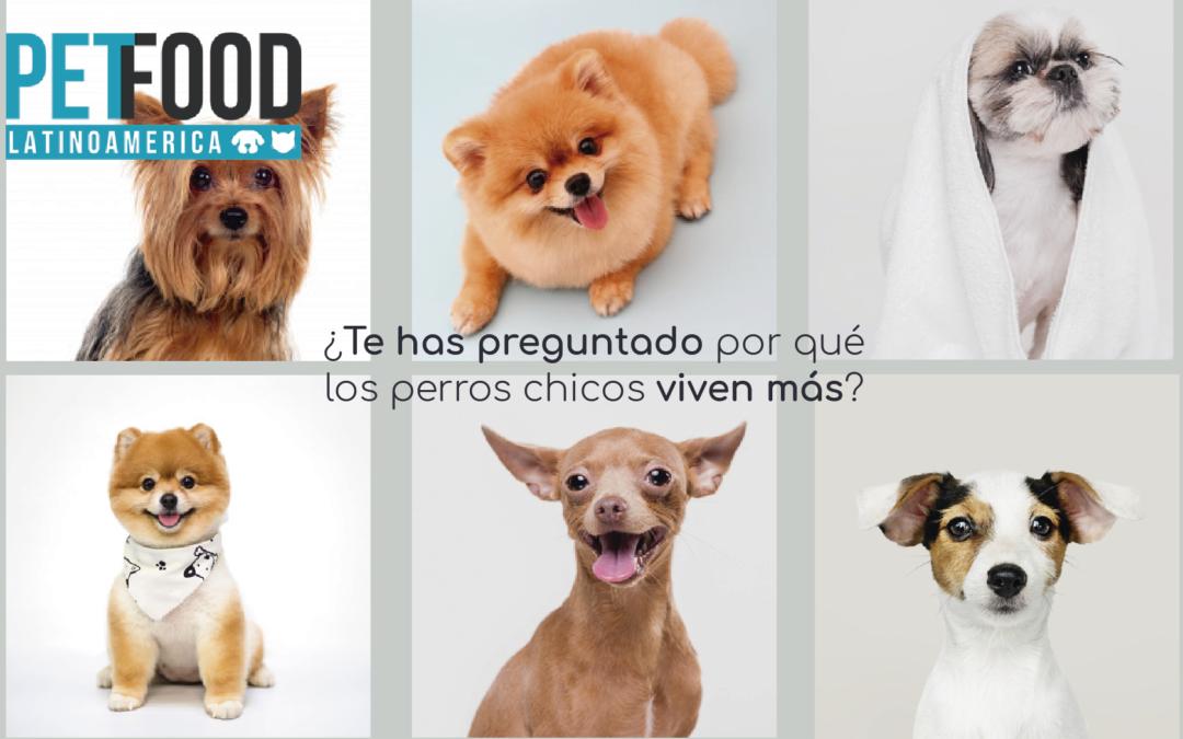 ¿Te has preguntado por qué los perros chicos viven más?