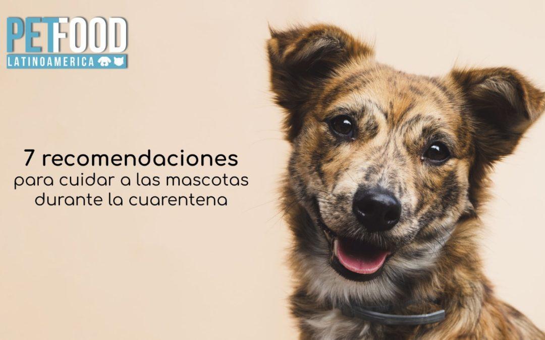 7 recomendaciones para cuidar a las mascotas durante la cuarentena