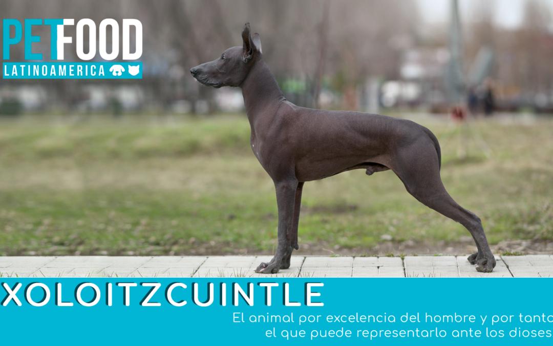 Xoloitzcuintle: El perro como símbolo religioso fue más que una deidad astral