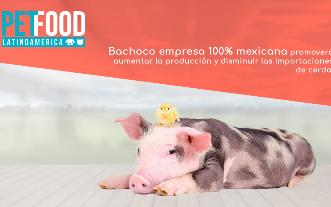 Bachoco suma a su negocio la producción de carne de cerdo