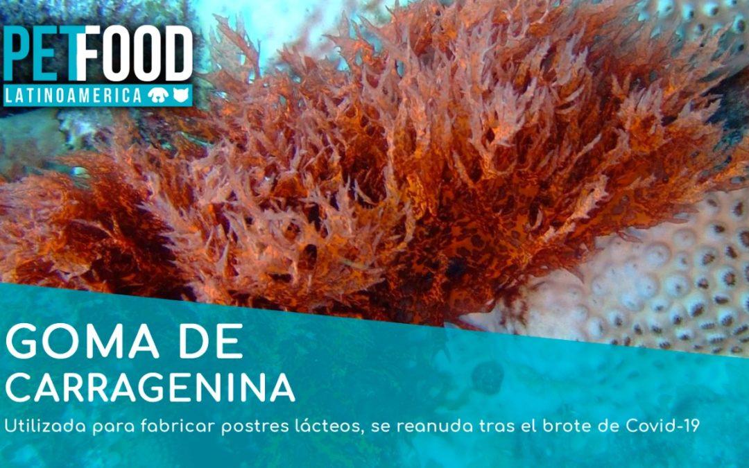 El mercado mundial de la Goma de Carragenina, se reanuda tras el brote de Covid-19