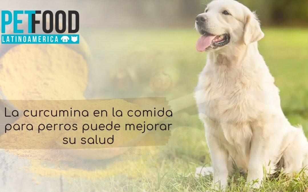La curcumina en la comida para perros puede mejorar su salud
