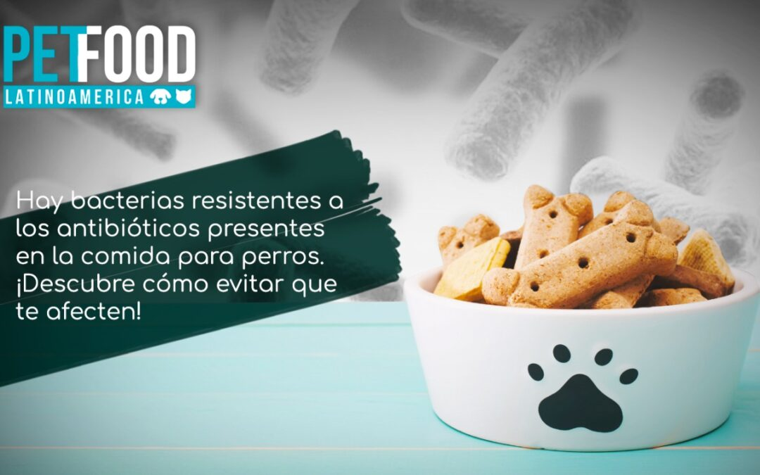 Hay bacterias resistentes a los antibióticos en la comida para perros: cómo evitar que te afecten